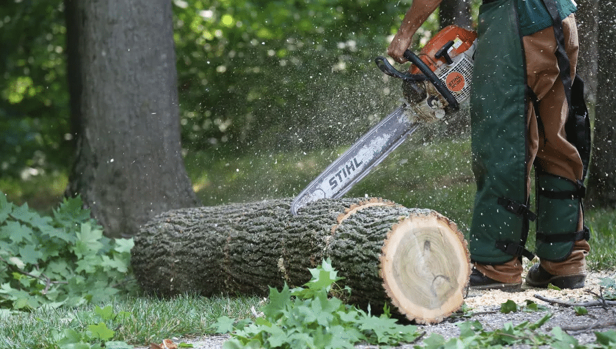 How Much Does It Cost To Cut Down A Tree