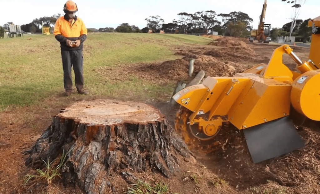 Cheap Tree Stump Removal