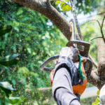 8 Reasons Why You Need to Hire a Tree Pruning Professional Today