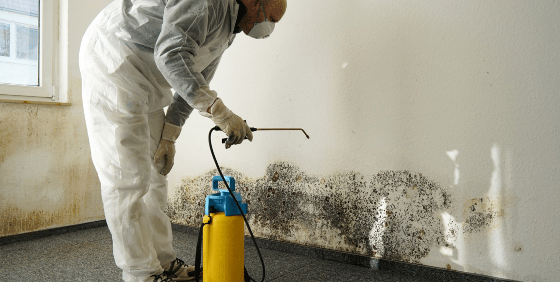 8 Signs to Detect Mold in Your Home