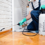 This Is How to Get Rid of Insects and Other Pests in Your Home