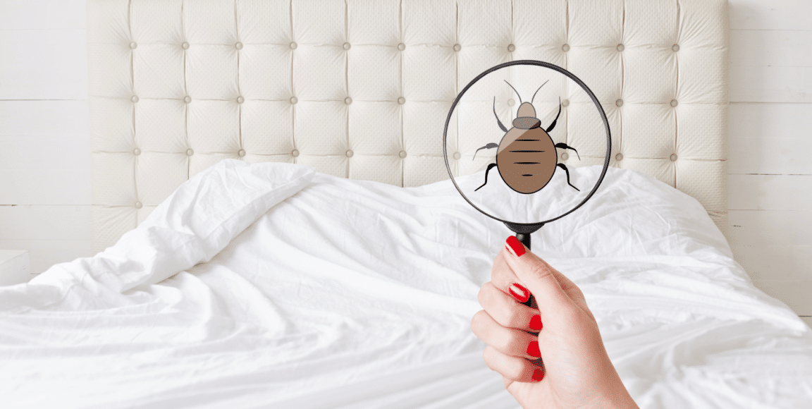 This Is How to Tell If You Have Bed Bugs in Your Mattress