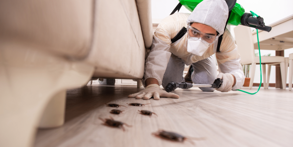 What Kills Bed Bugs Quickly? Your Ultimate Guide