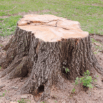 How to Remove a Tree Stump From Your Yard: A Simple Guide