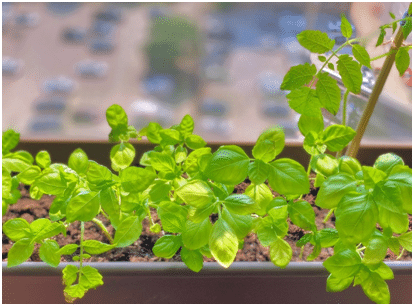 10 Inexpensive Indoor Gardening Ideas