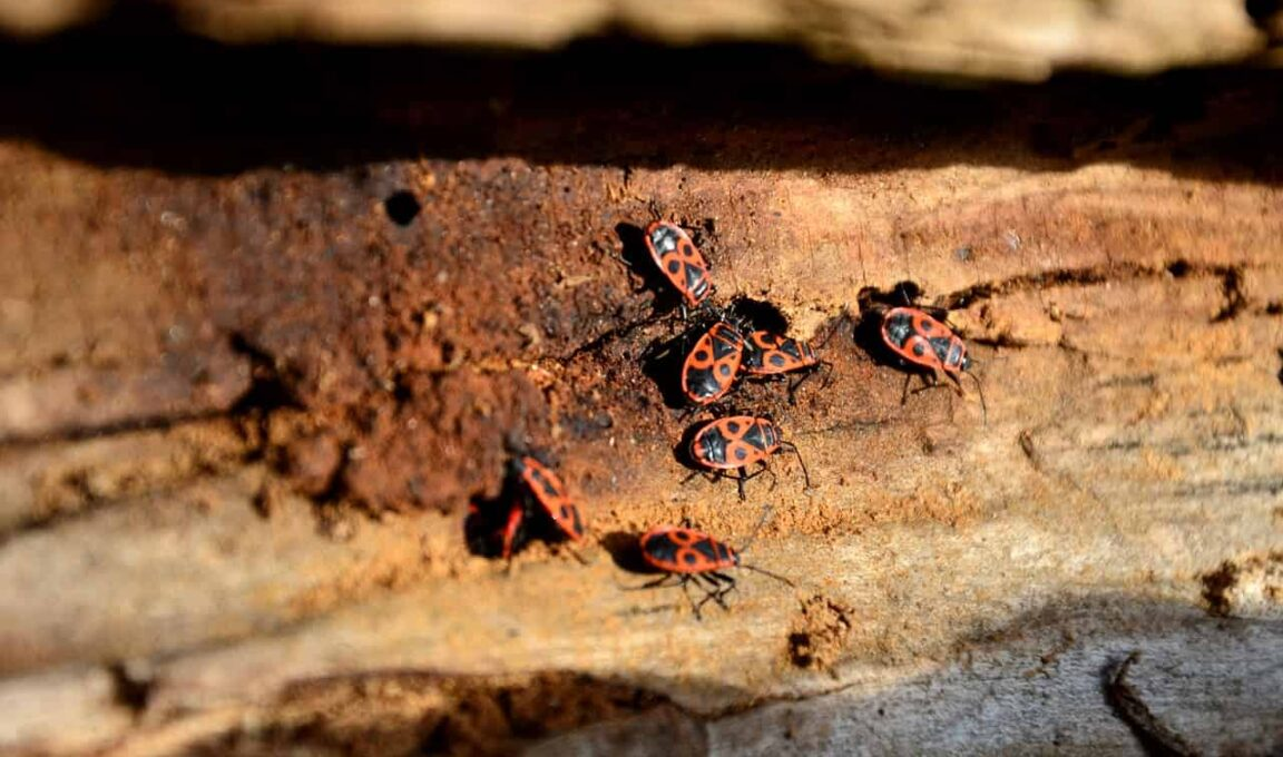 The Damaging Effects of Pests On Your Home, Health