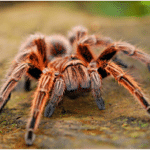 5 Harmless Spiders That Only Look Super Scary