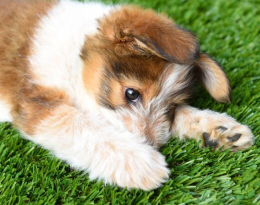 10 Tips For Installing Fake Grass For Dogs