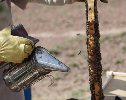 Bees? Why You Should Call a Professional Exterminator